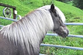 Alla hästar mår inte så bra!